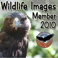 Wild Life Images